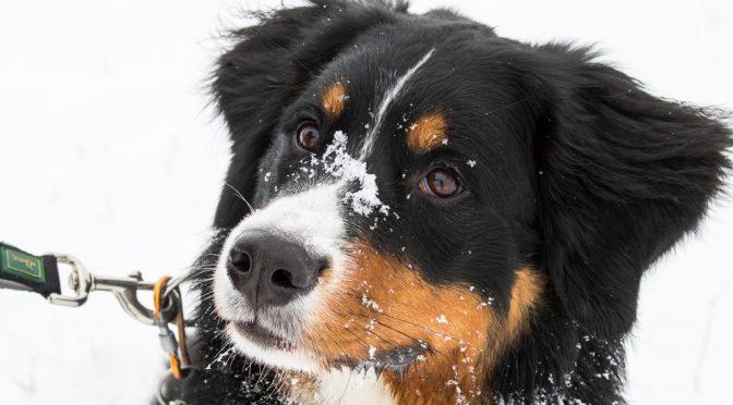 Lotta im Schnee